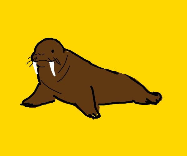 Walrus.