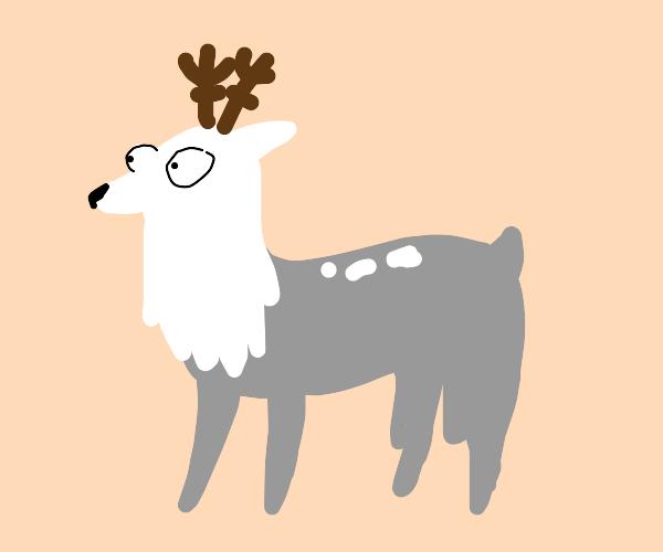 Derp reindeer