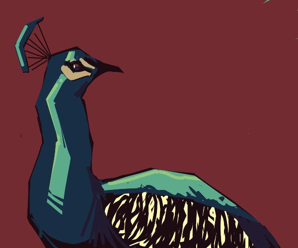 Novel Peacock