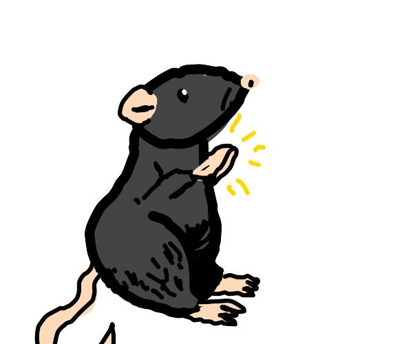 Rat praying