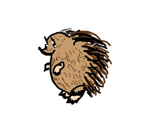 chunky lil hedgehog