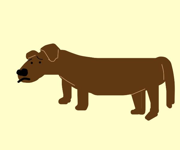 long sad dog