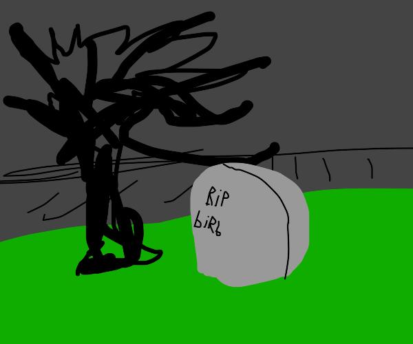 dead bird grave