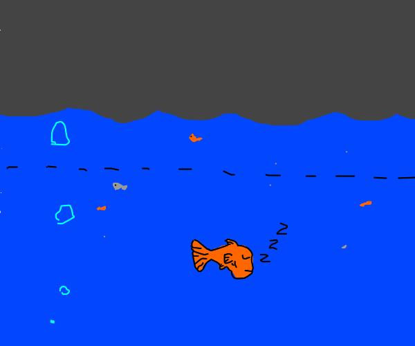 The fish sleeps underneath the surface.