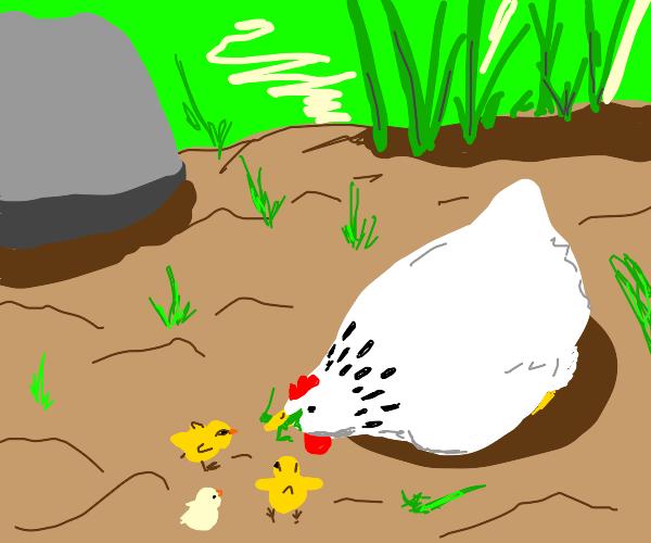 Mother Hen teaches the chicks