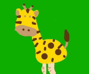 A giraffe with human legs