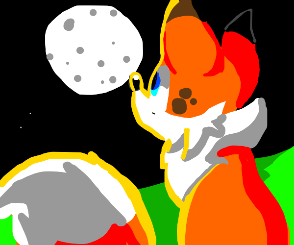 fox looks up at the moon