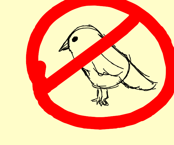 No more Birds