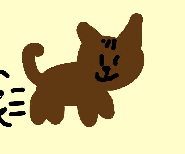 catto running