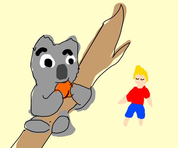 Koala enjoys peach in front of floating man