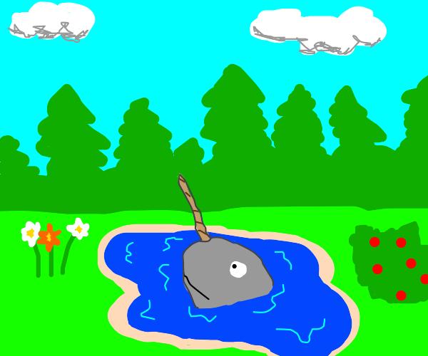 narwhal in garden pond