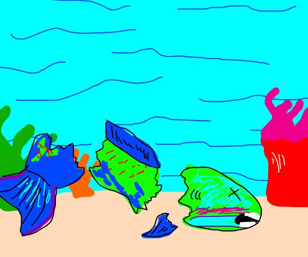 Broken Parrotfish