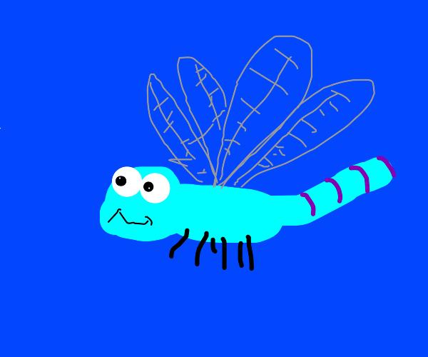 Cute little dragonfly