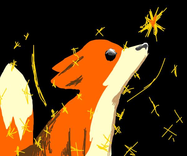 Sparkling Fox