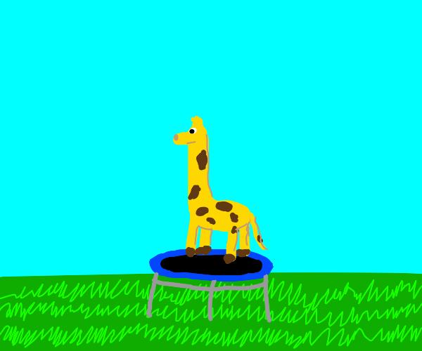 a giraffe jumping on a trampoline
