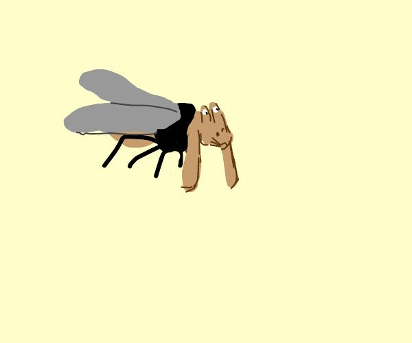 Jarjarfly