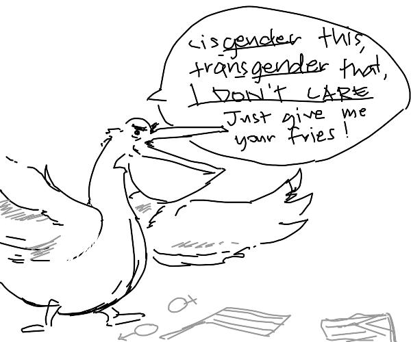 this pelican hates gender