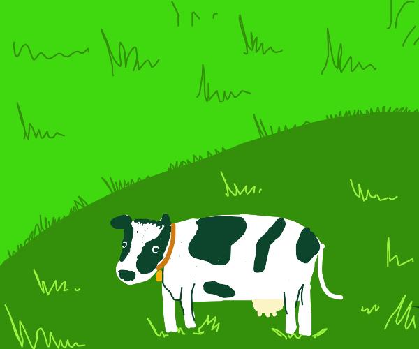 a cute cow on a grassland