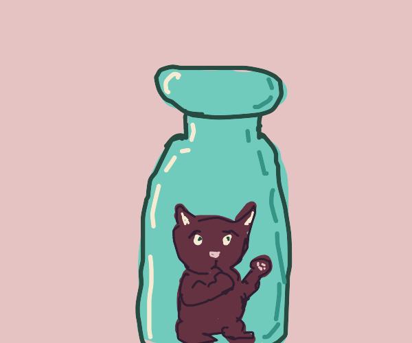 cat stuck in bottle