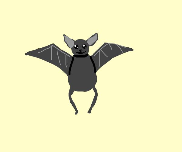 a very cute bat