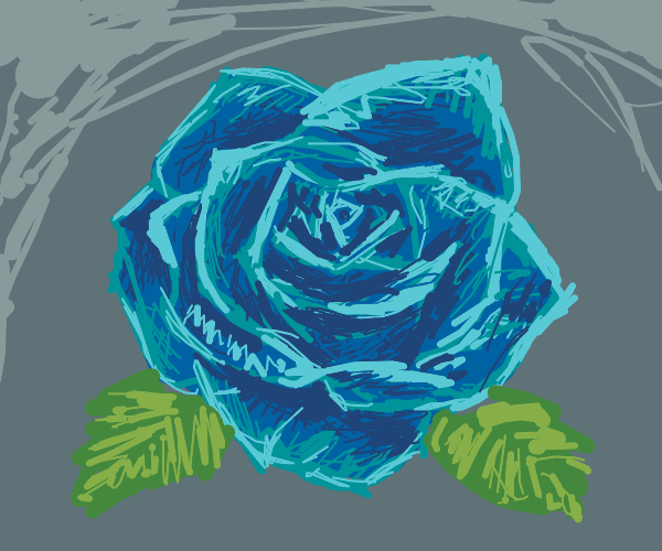 pretty blue rose flower