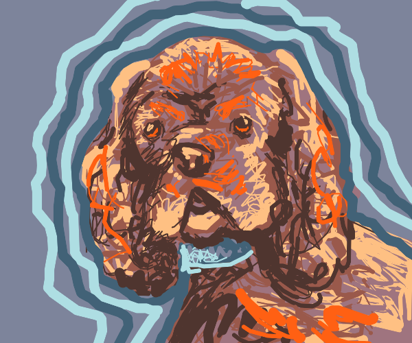 cockerspaniel with blue collar :)