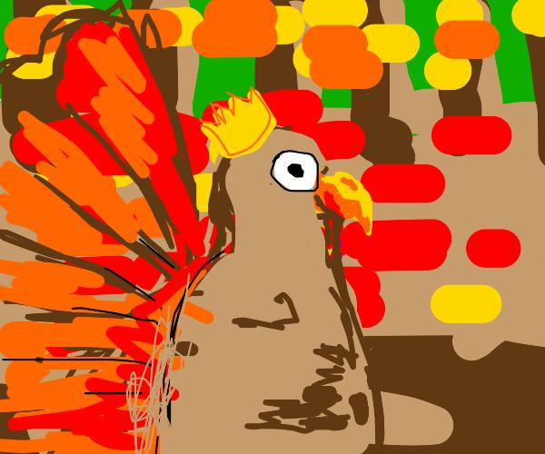 Turkey king