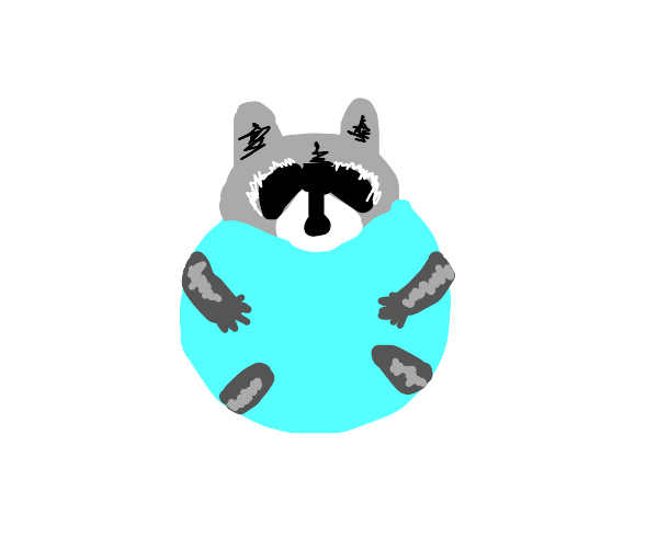 raccoon hugs bubble