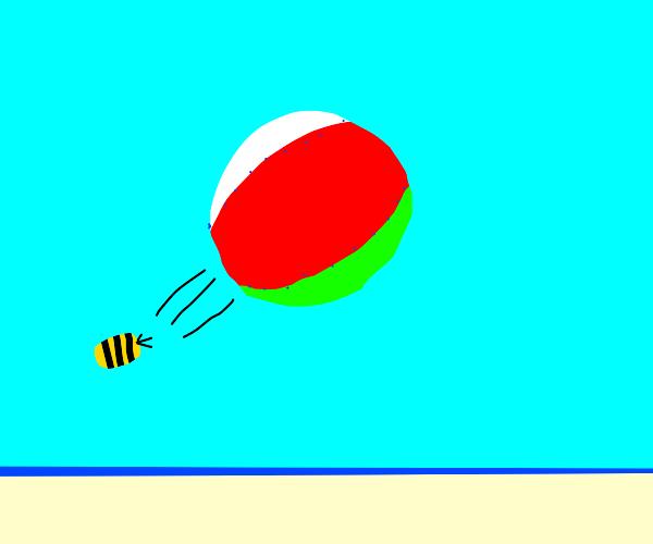 bee plays with beach ball on the beach
