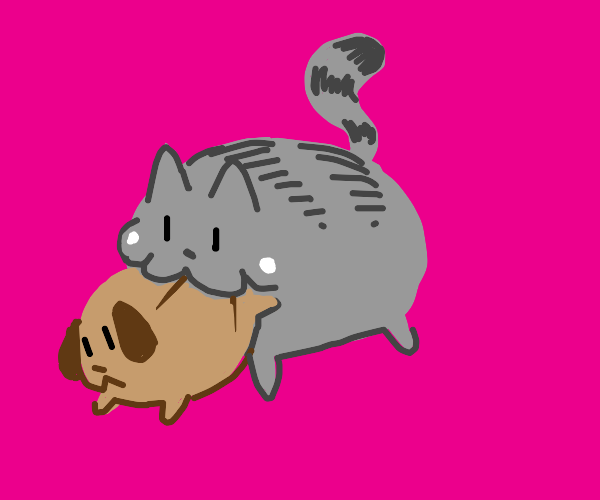 A cat eating a dog!?!?!??!?!