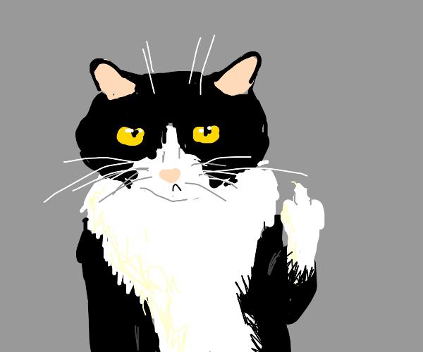 Rude Kitty