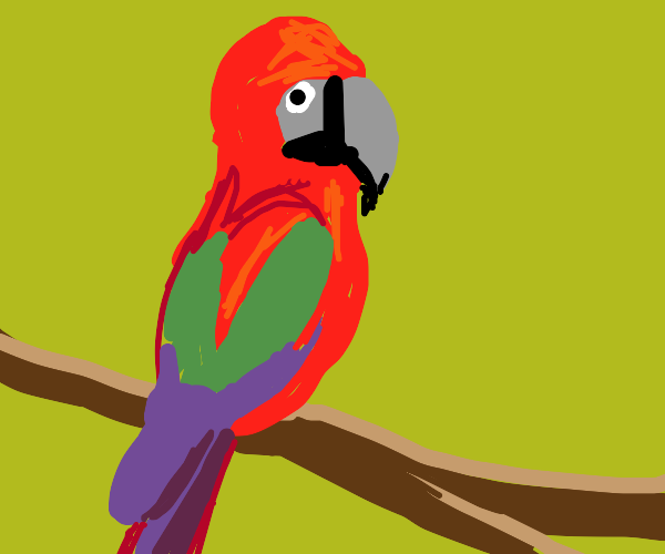 tropical parrot on branch