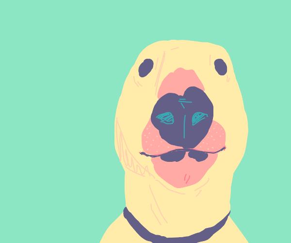 Nelson the Bull Terrier