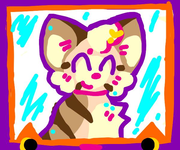 Cat inside of a purple/orange frame