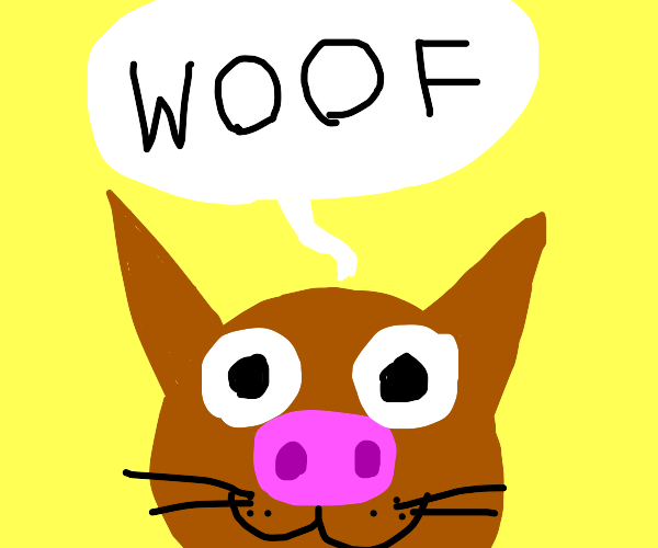 Cat that looks like a pig says woof