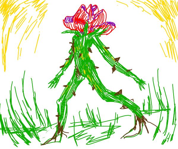 Walking rose plant