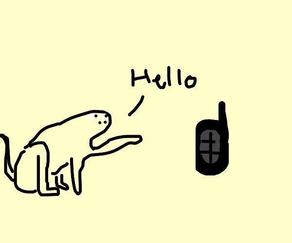 Monkey saying hi to walkie talkie