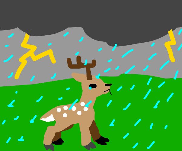 deer in a thunderstorm