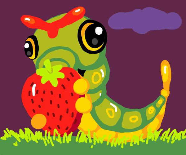 Caterpie luvs yummy strawberries :3