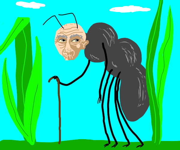old man ant