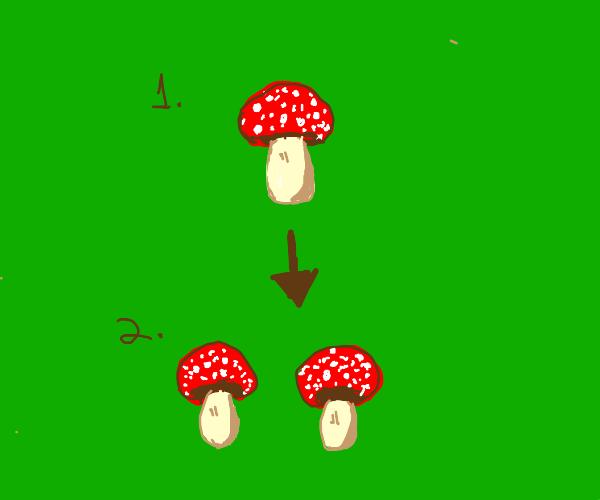 mushroom performs mitosis