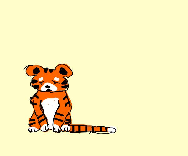 Casual tiger