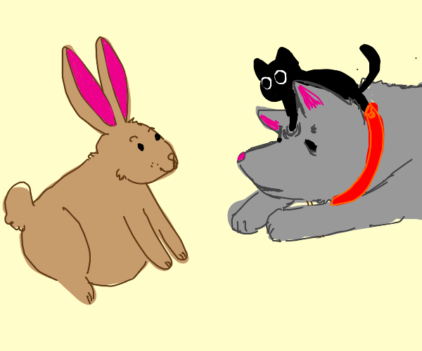 Rabbit finds cat and dog amusing