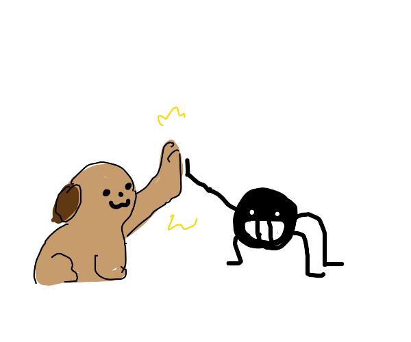 Dog loving spider