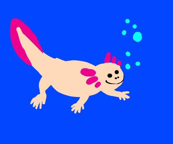 Thicc Axolotl