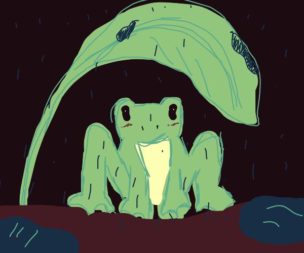 Frog using a leaf as umbrella. How cute