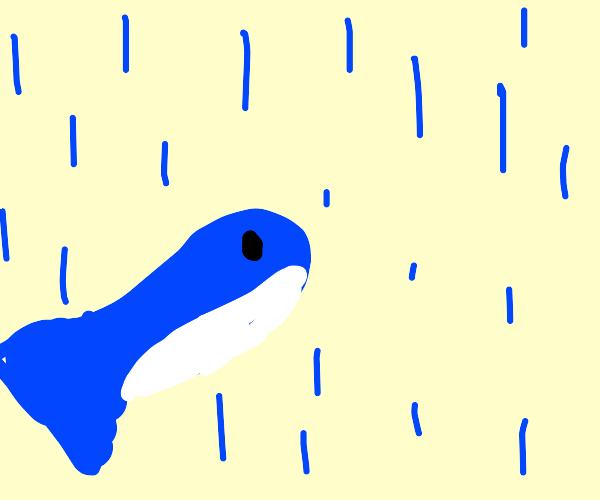 whale looks at rain