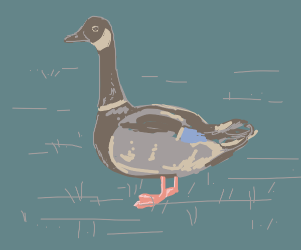 half duck half goose pet