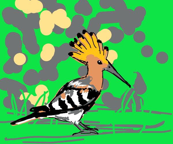Portugal Hoopoe (type of bird)