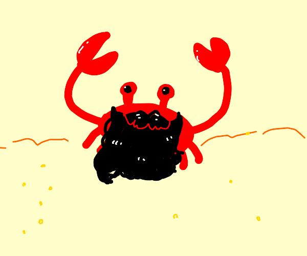 A bearded crab